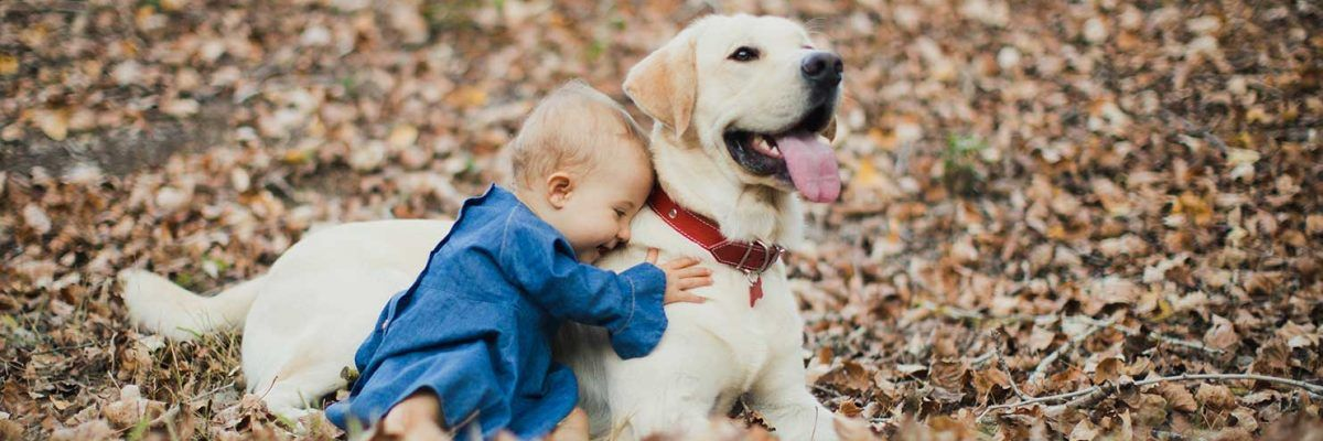 Un paseo por el campo en familia con perro mola más